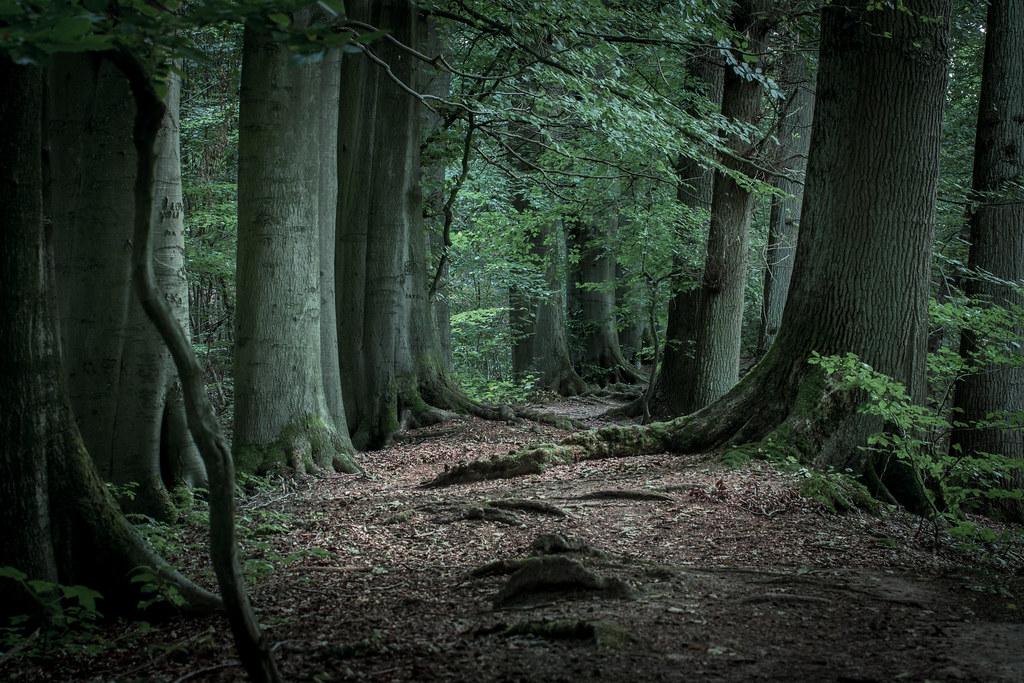 in the woods deutsch