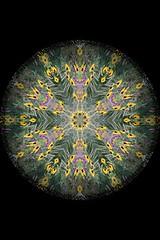 dishware(0.0), kaleidoscope(0.0), art(1.0), pattern(1.0), symmetry(1.0), fractal art(1.0), psychedelic art(1.0), design(1.0), circle(1.0),