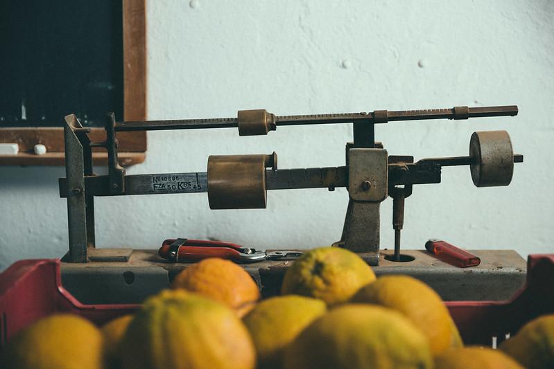 gin-eva-recogida-naranjas-baja-8