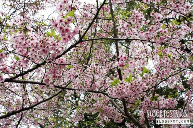 japan tokyo trip ueno park 23