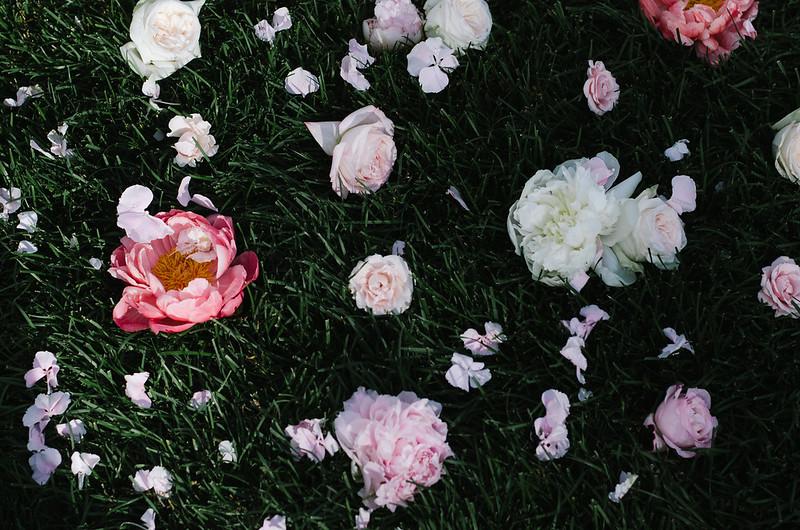 An Aisle Lined with Flower Heads Rather Than Flower Petals on juliettelaura.blogspot.com