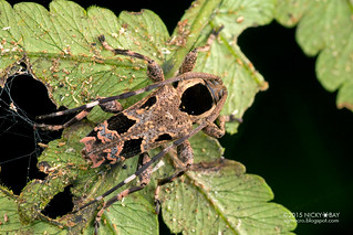 Longhorn beetle (Colobothea assimilis) - DSC_3850