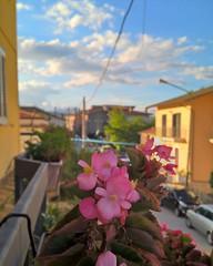 #ishowyouzolli // #lumia640XLtrial #richcapturemode #nofilter #shotonlumia #shotonmylumia #lumia640XL #nocrop #flowers #flowersofinstagram #macro #macrophotography #naturelovers #landscape #borough #village #cityscape #rsa_streetview #macro_brilliance #bd