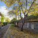cottages in autumn by D-j-L