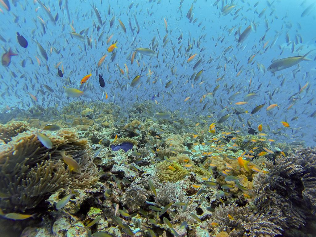 Mnemba Atoll snorkeling tour- Reef Fishes @ Mnemba Atoll