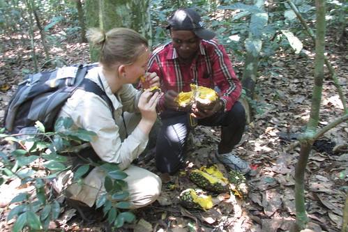 Rachelle sampling bonobo fruit_Annonidium