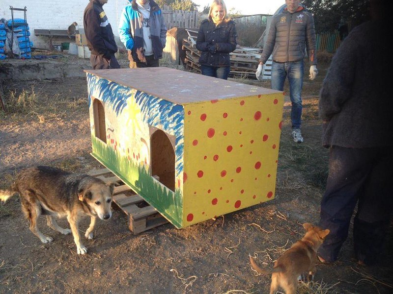 Отчет: Помощь приюту для животных в с.Деремезна