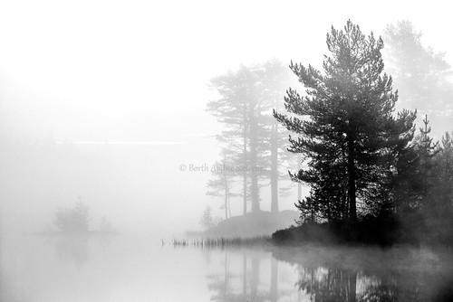 morning autumn trees blackandwhite bw mist lake nature water norway misty fog forest sunrise norge natur foggy nopeople skog tre dis vann høst tåke morningmist drammen buskerud drammensmarka
