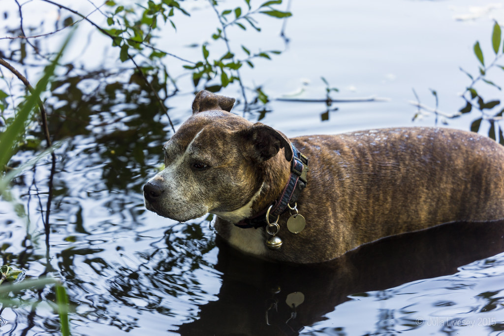 Jez cools down in Creekmoor Ponds