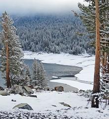 Spring, Yosemite High Country 5-15.jpg