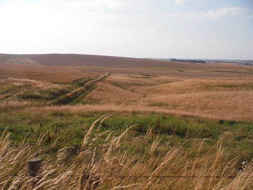 Rolling Wessex Landscape