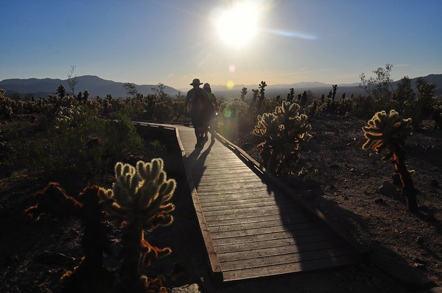 Cholla Garden Boardwalk