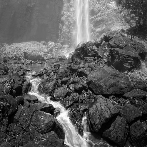 trees water forest landscape waterfall gums queensland ferns eucalypts gumtrees mainrangenationalpark queenmaryfalls watergrasses
