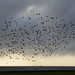 Bird cluster flying along the Lakefront in Mandeville, Louisiana by Monceau