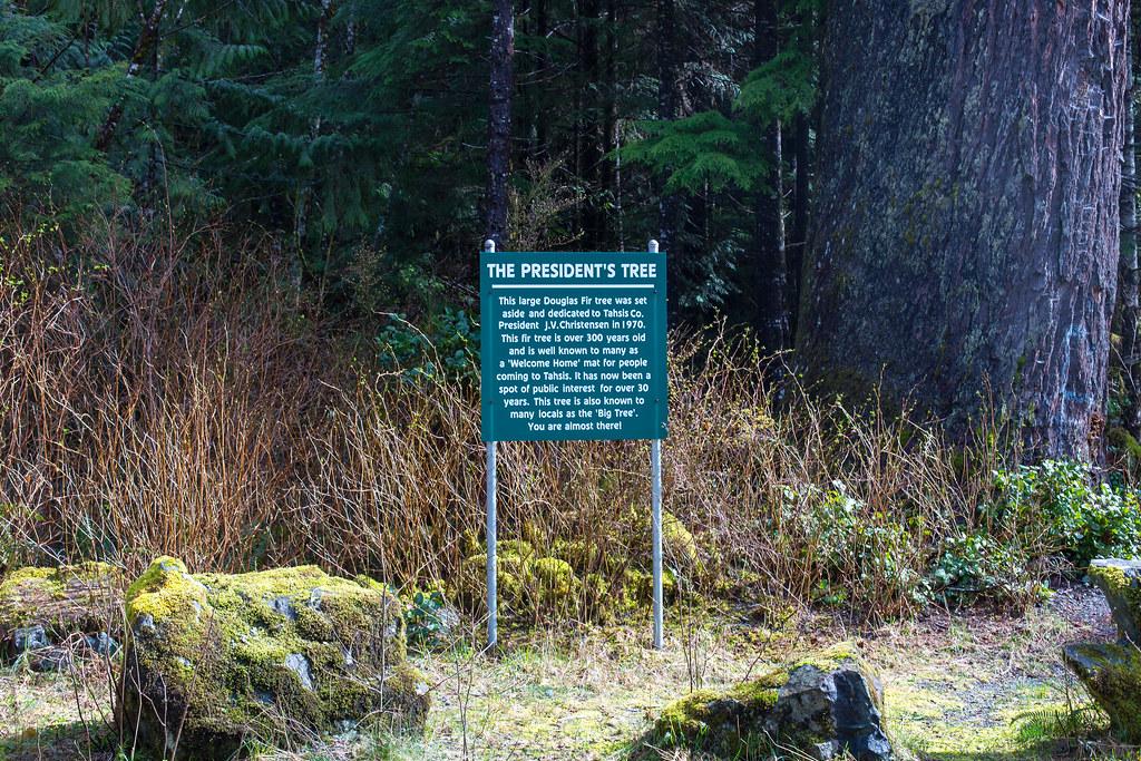 Vancouver Island. President's Tree