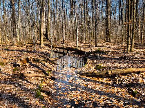 landscape cleveland bradleywoodsreservation metropark ohio unitedstates us