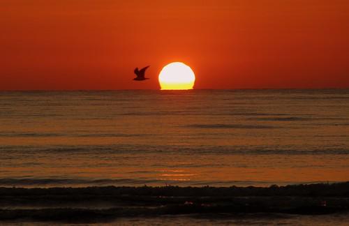 alba sunrise sole sun mare sea onde waves uccello bird volo flight loslobos
