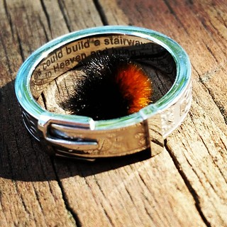 Fall is coming!!! Found this cute little #woolybear #catapillar yesterday. It was SO tiny, it fit inside my #pawprint #dogcollar remembrance ring! #fall #autumn #newengland #603 #toocute #love #woolybearcaterpillar #ring