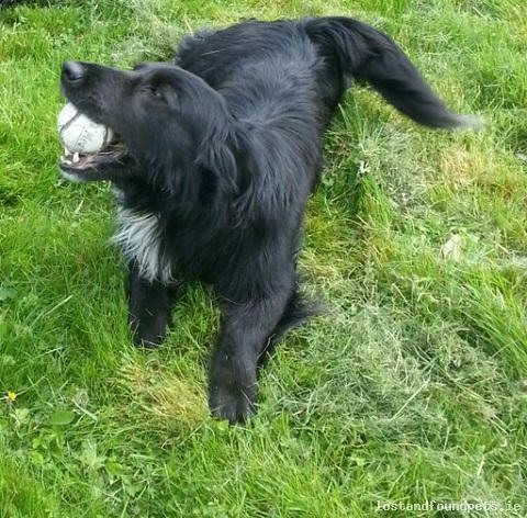 Sun, Jul 26th, 2015 Lost Male Dog - Kilmacow, Dunkitt, Kilkenny