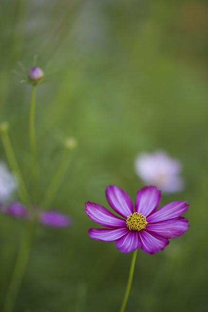 Mid August Garden