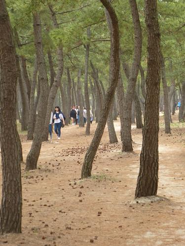 Co-Gangneung-Gyeongpo-Pinède (4)
