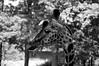 Giraffe by darek.zon