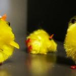 Chicks, man!!