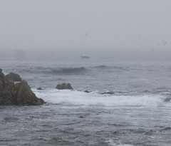 Humpback whale from coast in Pacific Grove! DSC_0585