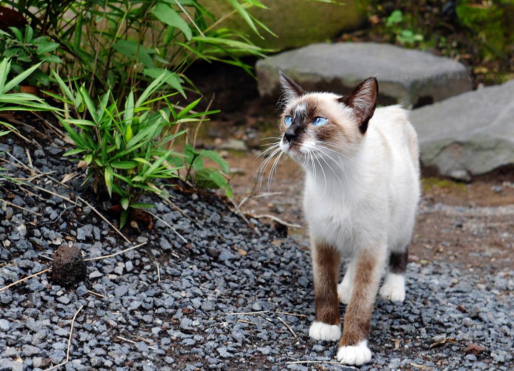 由布院の猫