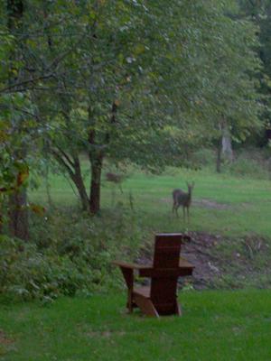 CITW_deer