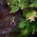 DEWY WEB by Des Hawley. 1.5 million views !