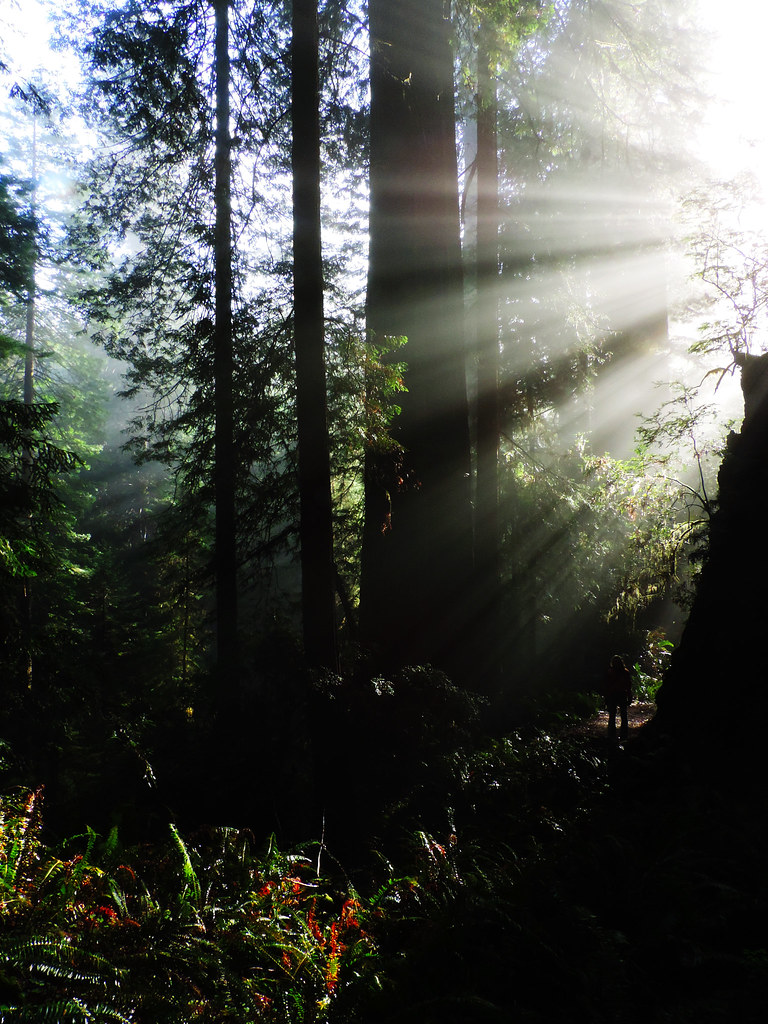 Best Late Spring Hikes In California: James Irvine Trail, Prairie Creek Redwoods State Park