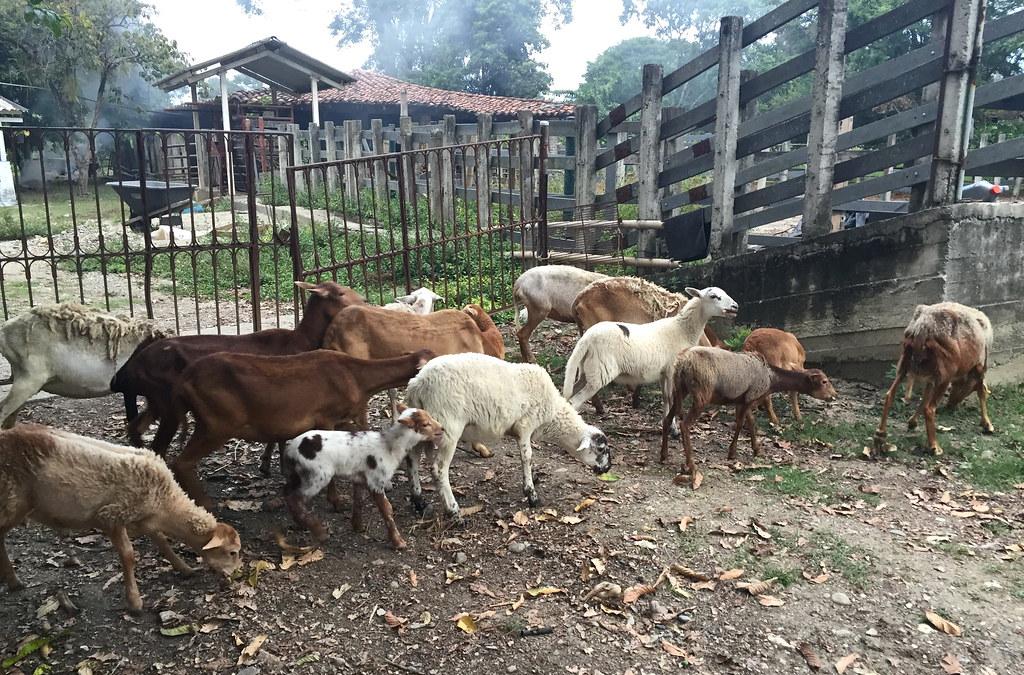 Valentina's Farm 17