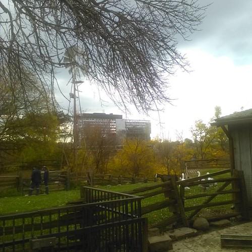 Riverdale Farm, looking east #toronto #riverdaleparkwest #riverdalefarm #bridgepoint #goose #geese