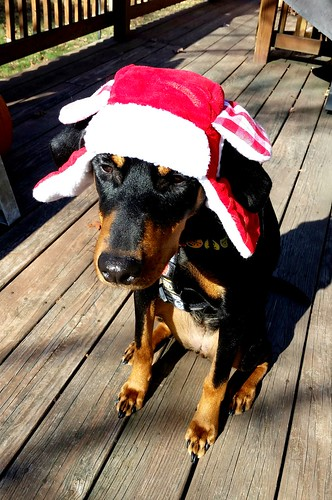 Doberman in a Trapper Hat - Lapdog Creations