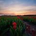 Primavera en Holanda by Caramad