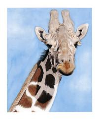 girafe300dpi