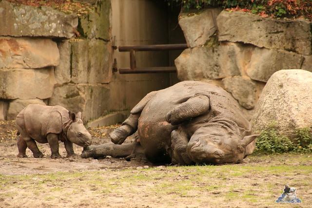 Tierpark Berlin 18.10.2015  0231
