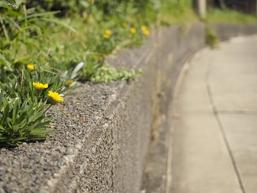坂に咲く花