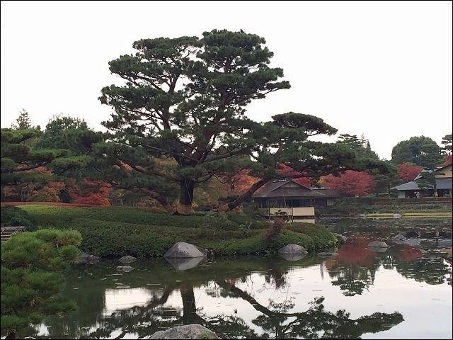 201511昭和公園_3969