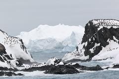 img_3045 Elephant Island 1853