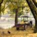 Ginkgo dream by MelindaChan ^..^