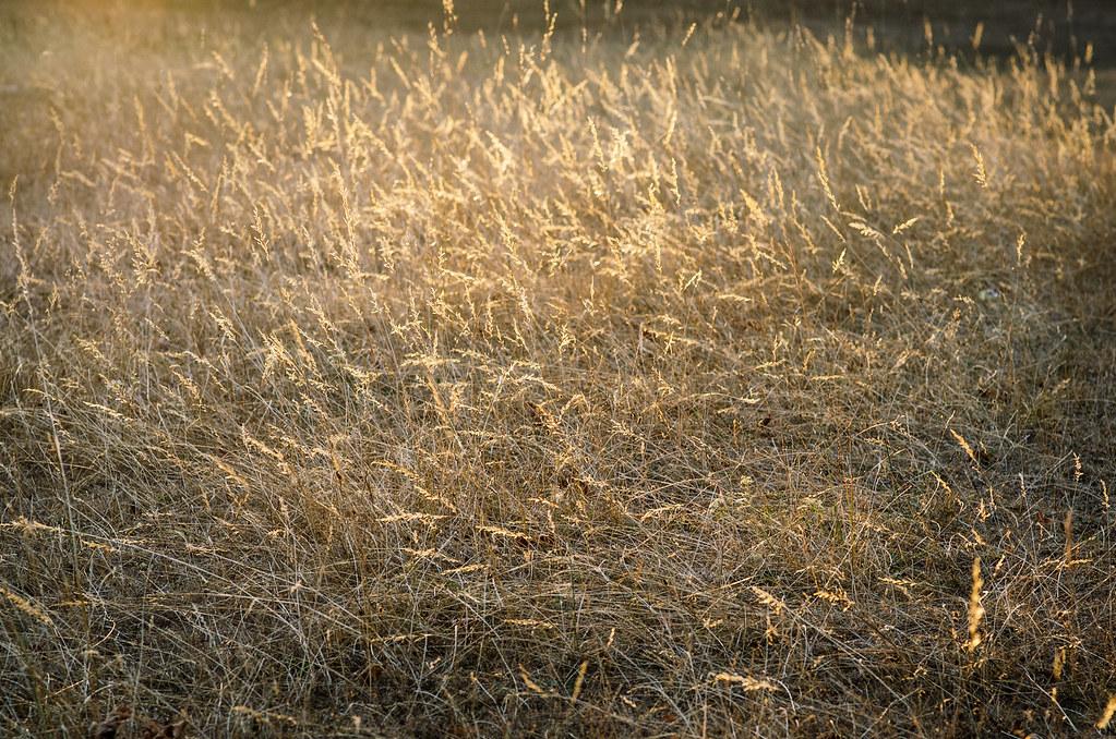 Dans l'Aube, chemins de Compostelle et via Francigena  - Carnet de voyage en France - Herbes folles