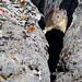 The rock climber by WhiteEye2
