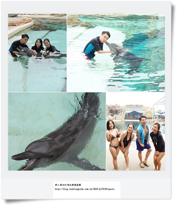 (旅遊 新加坡) 海豚園 ~ 和海豚玩親親 近距離互動玩遊戲 ~ 來聖淘沙名勝世界沒玩肯定後悔