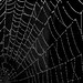 web by maggie224 -