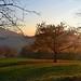 L'ho trovato.....l'albero dorato:-)    (Explore 24-11-15) by rosy.c