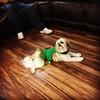 Lola doing her dress rehearsal for Christmas.