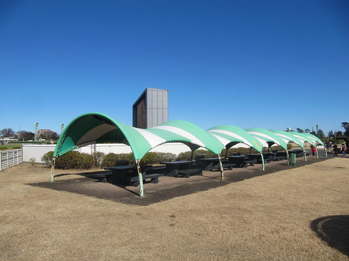 中山競馬場の妙に屋根が低いベンチ