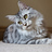 the Maine Coon Cats group icon